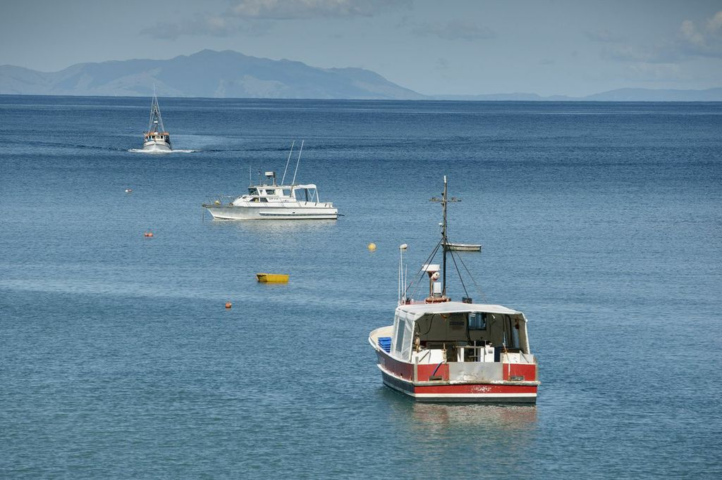 Fishing Boats in New Zealand